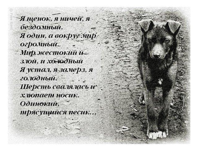 Собак ты мой любимый стих